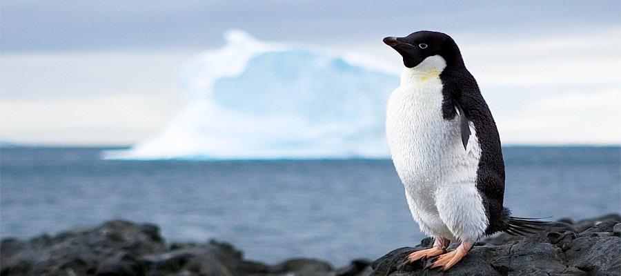 antarctica-photography-angle