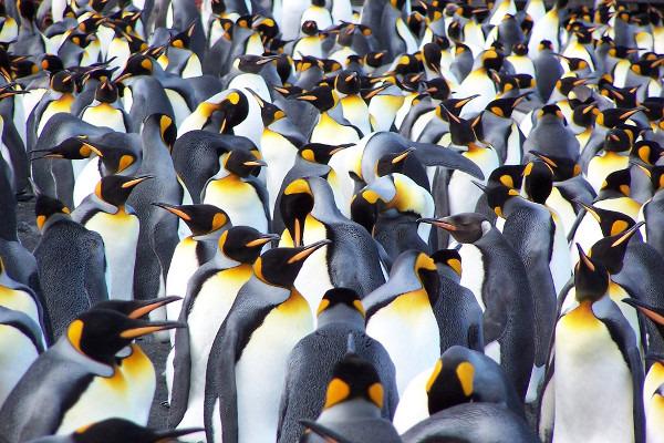 Antarctica Via Falklands and South Georgia Cruise