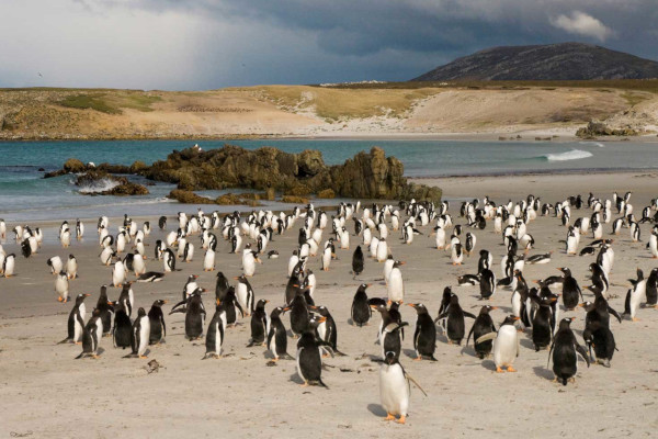 How Much Would You Pay For Four-Miles of beach, and Thousands Of Penguins?